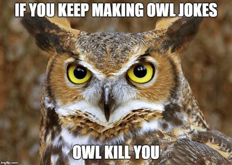 Owl Meme - owl joke meme imgflip