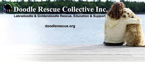 doodle rescue petfinder pets for adoption at doodle rescue collective inc in