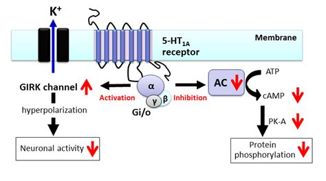 Improving the Treatment of Parkinson's Disease: A Novel ... G Protein Coupled Receptors Pathway