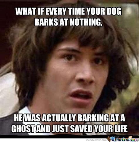 when your dog barks every time you leave home why do dogs what nothing memes best collection of funny what nothing