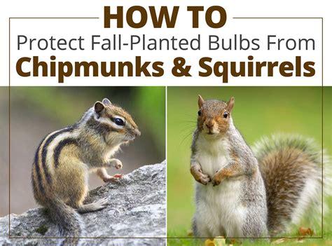 how to discourage squirrels in the garden garden ftempo