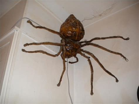 australian house spider australian spiders clock www pixshark com images galleries with a bite
