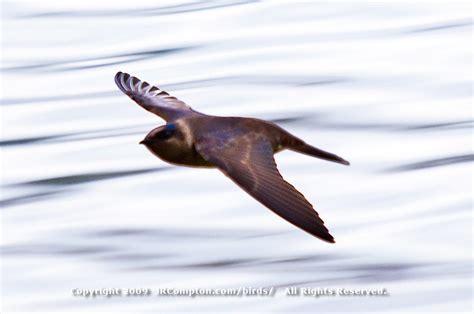 fast bird