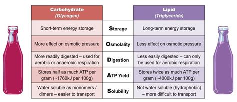 carbohydrates vs proteins sugars versus lipids bioninja