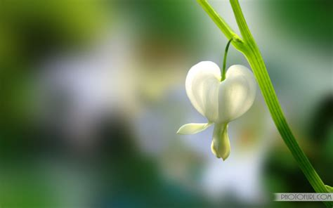 flower wallpaper to download spring flower wallpaper free download free wallpapers