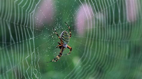 hd web spider web wallpapers archives hdwallsource