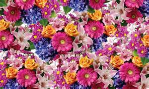 This flower pattern will fill your backgrounds with dazzling array of