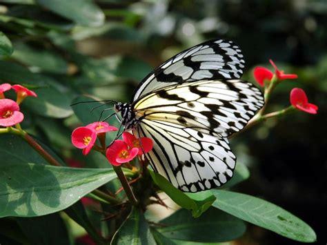 nada afiqah gambar flora dan fauna 2 chainimage