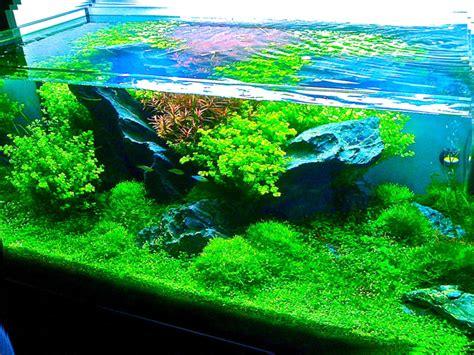 le scalaire nyon aquariums aquariophilie eau douce eau de mer reptiles rongeurs plantes