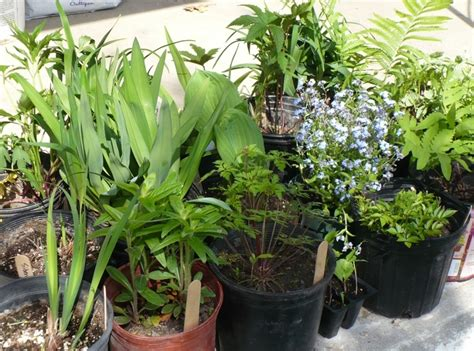 Garden Plants For Sale by Innes Society Annual Plant Sale Sustainable