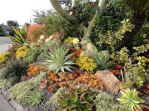 landscaping with succulents 143 best images about succulents in the landscape on gardens landscape design and