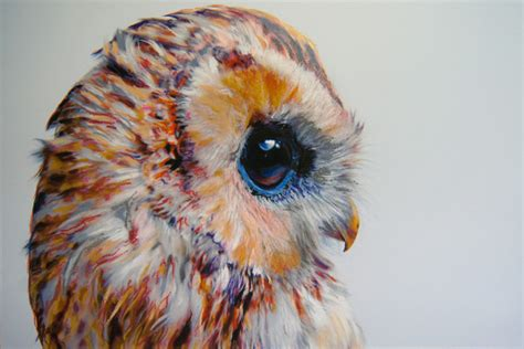 colored owls colored owl drawings by pusateri colossal