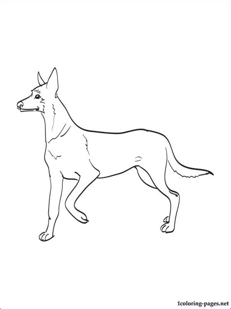 48 Nice Dog Breed Coloring Pages Gianfreda Net Breed Coloring Pages