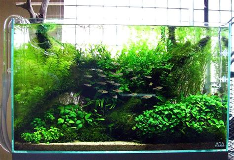 best substrate for aquascaping freshwater aquariums get to know the different types of