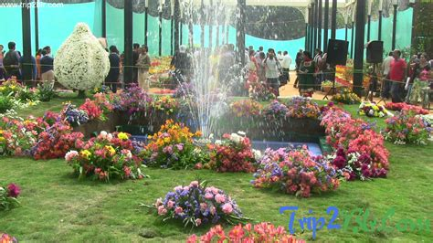 flower shoe lalbagh flower show 2014 photos 1