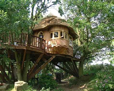 house trees lake district tree house blue forest