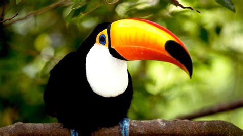 imagenes de animales y plantas de brasil what s the best temperature for a bird pet bird youtube