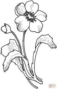 Papaveraceae Poppy Flower Coloring Coloring papaveraceae papaverbloem kleurplaat gratis kleurplaten