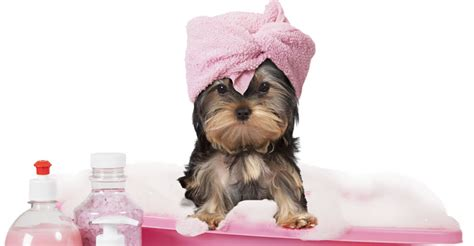 house call dog grooming contact us
