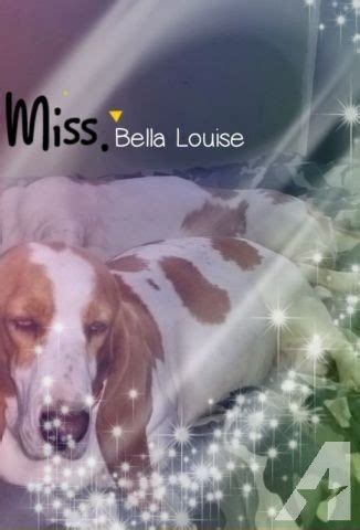 basset hound puppies for sale michigan ckc registered basset hound puppies for sale in manton michigan classified