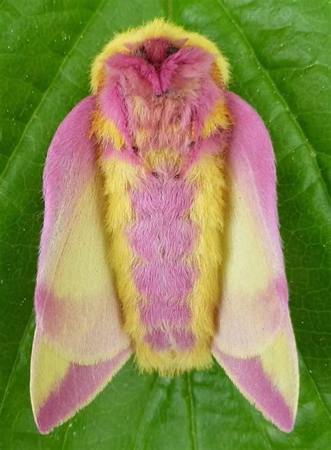 7 Gorgeous Sweaters By Moth by Esta Colorida Mariposa Est 225 Considerada El Insecto M 225 S