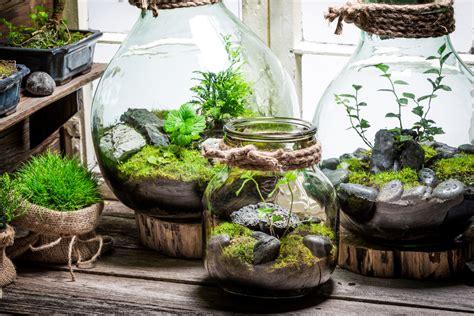making  woodland terrarium   home homestead brooklyn
