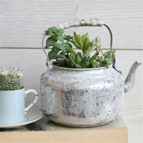Teapot Planters by Aged Metal Teapot Planter By Magpie Living