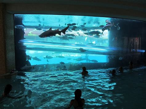 infinity aquarium design las vegas nv 150 best swimming pool images on pinterest beautiful