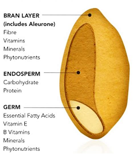 3 whole grains what is whole grain whole grain vs whole wheat