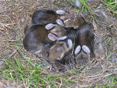 Baby Nest Bunny Blue baby bunny nest