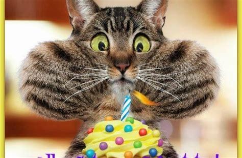 Lustige Katze Mit Geburtstagstorte Alles Gute Zum