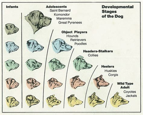 the domestication how wolves and humans coevolved books the self domestication hypothesis world transformation