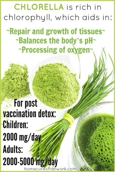 Algae Detox Diet by 17 Best Images About Heavy Metal Detox On