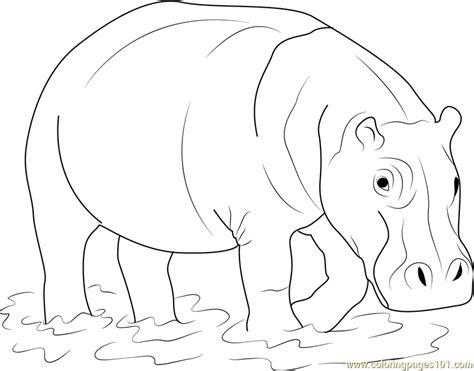 hippopotamus in water coloring page free hippopotamus