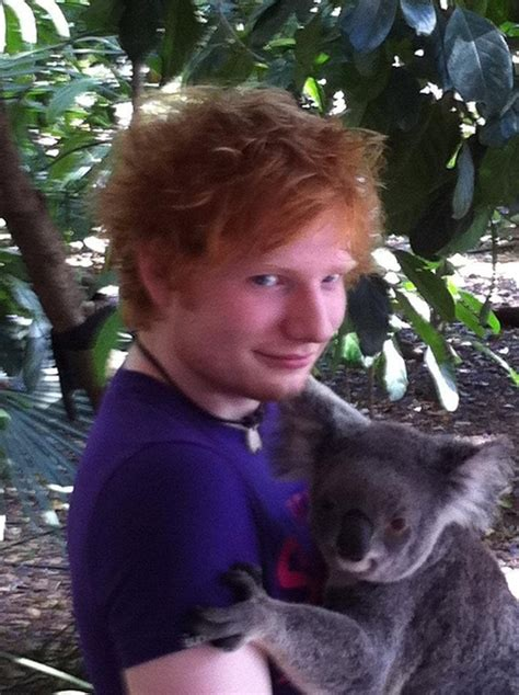 ed sheeran zoo 17 best images about koalas on pinterest a button funny