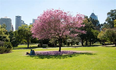 The Ten Best Picnic Spots In Brisbane Concrete City Botanical Gardens Brisbane