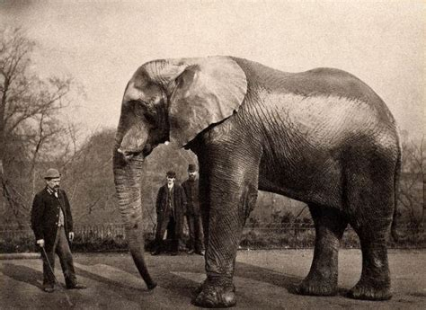 Elephant Jumbo the tragic tale of jumbo the elephant ghosts media