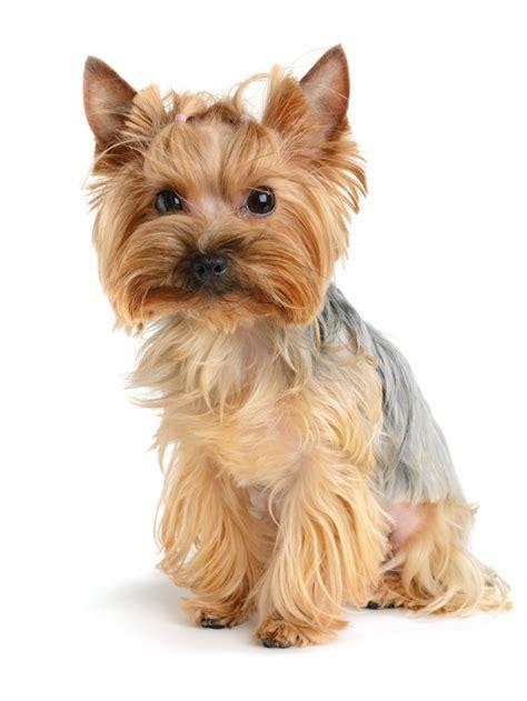 可爱的狗狗高清图片