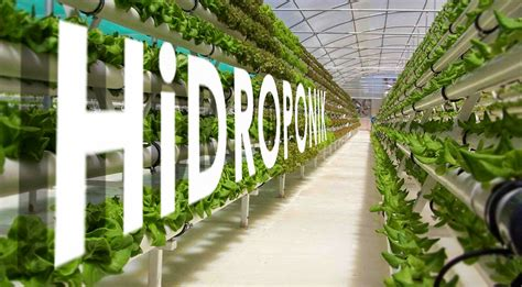 Membuat Rumah Kaca Hidroponik | benefit of greenhouse for hydroponic learning and