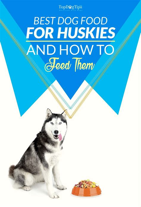 best organic food for puppies 5 best food for huskies 2017 what to feed huskies for top health