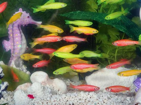 aggressive aquarium fish  fish lovers boldskycom