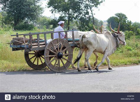 indian cart bullock cart www pixshark com images galleries with a