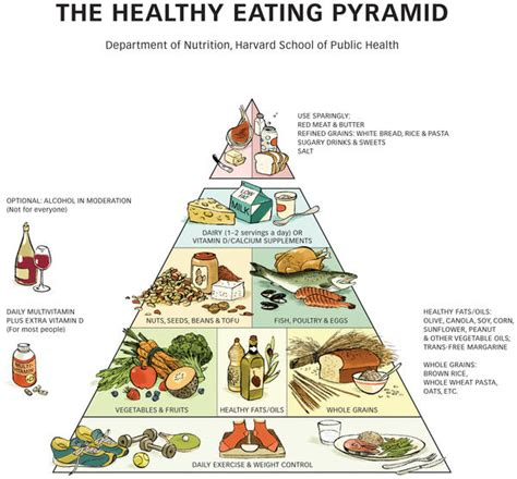 Food Pyramid Worksheet by Healthy Pyramid Worksheet What Doctors Want You