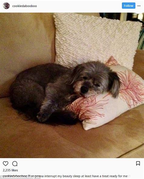 Instagram Dog | bethenny frankel s beloved dog cookie dies after seizure