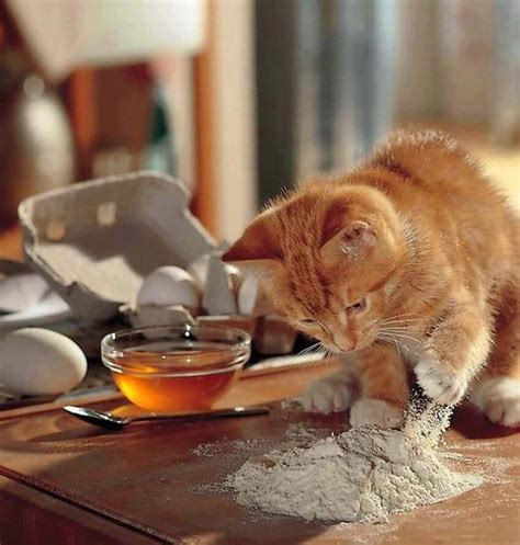 Cat Kitchen by 10 Cats Baking Goodies Cathub