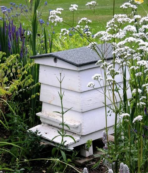 backyard beehives 25 best ideas about bee hives on pinterest hives and