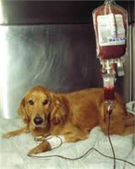 do dogs blood types animal radio 174 newsletter who s on animal radio 174 this month