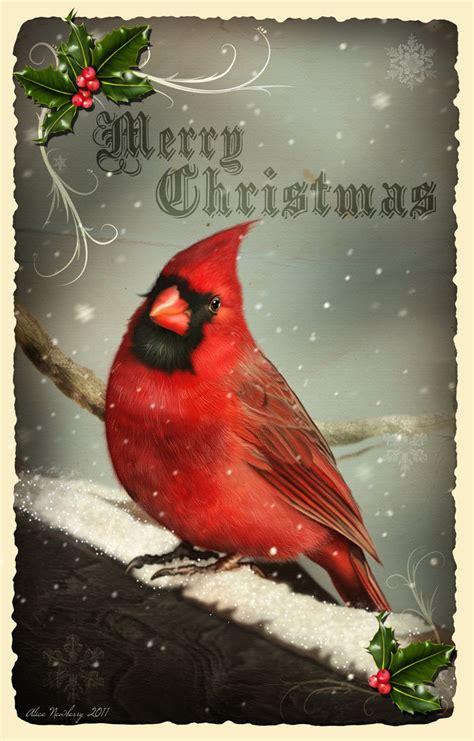 red cardinal christmas cards