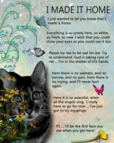 The death of a pet on pinterest the rainbow bridge pet loss and