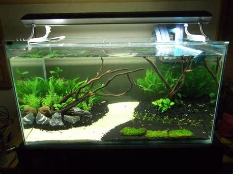 walstad aquarium aquarium fish tank aquarium fish